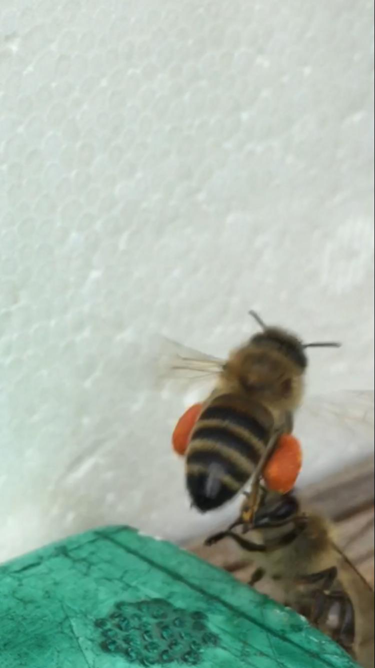 honig-moerfelden-honey-kuhn (3)