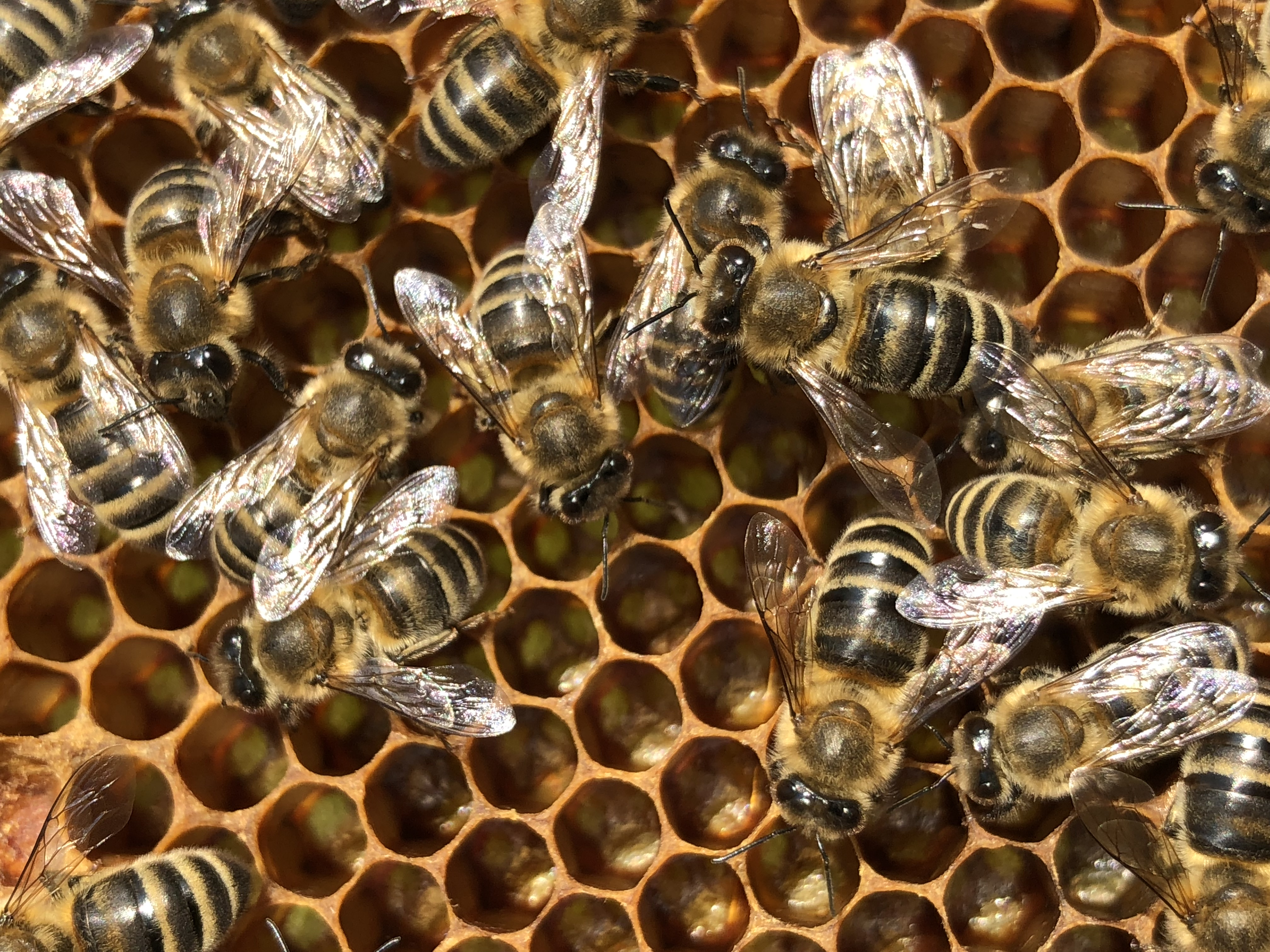 honig-moerfelden-honey-kuhn (63)